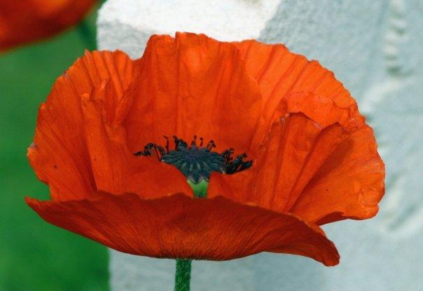 Gratitude and Remembrance